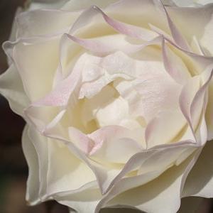 薔薇空中神殿より・・ヨガを語る・・☆