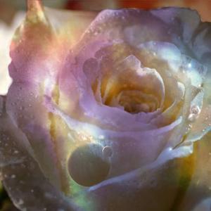 薔薇空中神殿・・ヨガ・フィットネスを語る