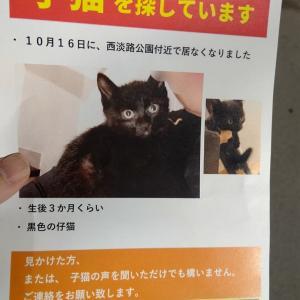 子猫を探しています~の昨日お見合いの紹介の後に!