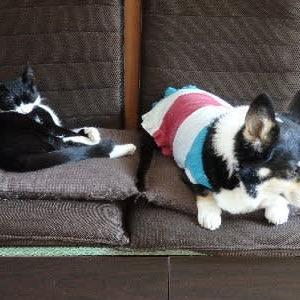 納得いかない犬とマイペースな猫。