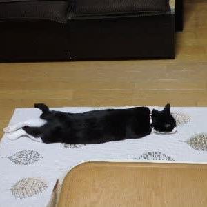 行き倒れる猫。