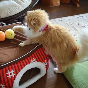 オレンジ? みかん? ニャン?