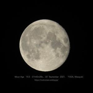 月齢15.5のお月さん