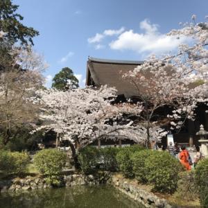 三井寺の桜と石碑 2020