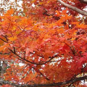 北杜市の秋