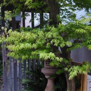 木の芽伸ぶ