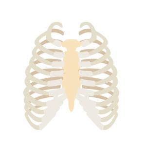 ★寒く、風が強い時期に肋骨(ろっこつ)を負傷する方は多い!肋骨(ろっこつ)治療の基本をご記憶ください。