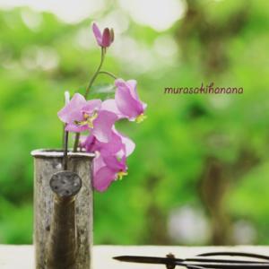 5月〜Mygarden Color〜PURPLE