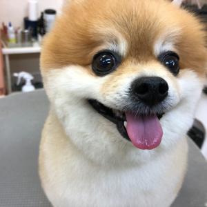 愛犬が暑さで息が荒いと身体で何が起こる?