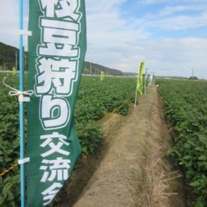 明日(10/12)宗像市で2019枝豆狩り交流会