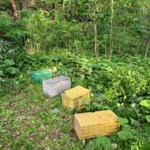 蜜蜂の移動