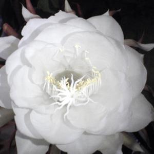 言霊の詩(コトダマのうた)172: 神、法則~自分自身のマスター