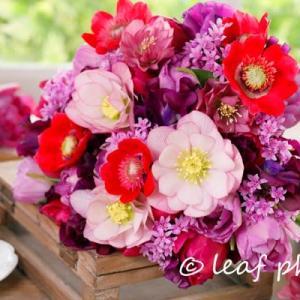 赤いアネモネの花と