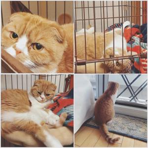 6日だけの限定!猫のいる生活(^^)