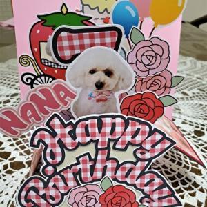 Birthdayp  resent 2 6/24