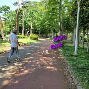赤塚公園 6/18