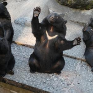 熊には会いたくない