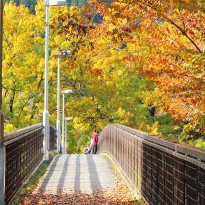 おすすめ紅葉スポット『金石水管橋』(11/10)