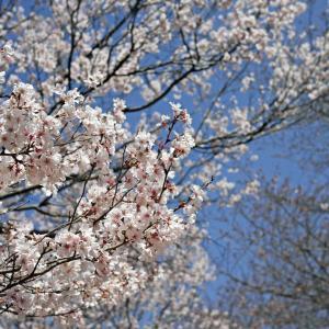 桜を求めて荒川CR野点ライド[前編]
