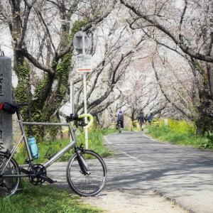 春の荒サイを満喫する花見&野点ライド