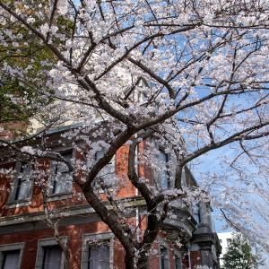 横浜の桜2020[4]