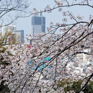 横浜の桜2020[5]