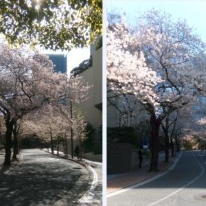 赤坂桜坂にて