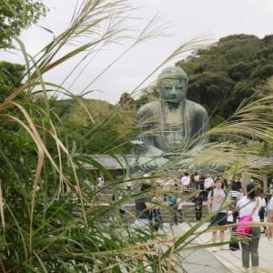 鎌倉高徳院・ススキ揺れて大仏様、花の長谷寺に吾亦紅