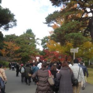 「TOKYO街旅」東京駅から皇居乾通り、「大嘗宮」を見て、北の丸公園、靖国神社の銀杏