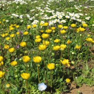 コロナ禍、異様な春・3月が去る