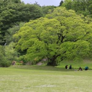 令和2年の4月が最終週になりました。緑は萌え、ひと人は蟄居