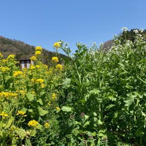畑は花盛り。お野菜の花も可愛いくて…そして、ミントと共生しているのは⁉️