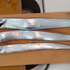 無理やり太刀魚の刺身