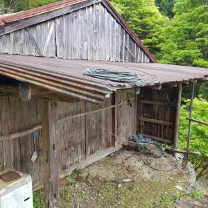 日本一時帰国(23)田舎でたけのこ堀りとバーベキュー