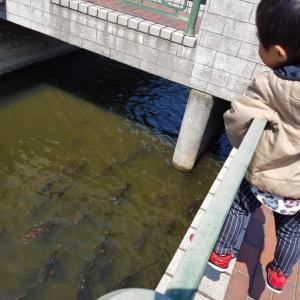 日本一時帰国②トライリンガル日本の幼稚園へ