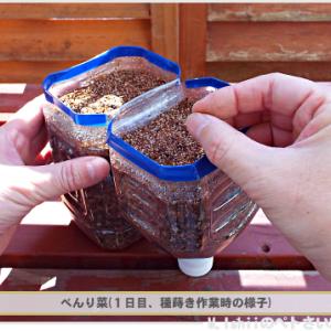 11/14 「べんり菜」の種を蒔いてみました!!
