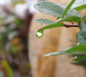 「青梅・小雨の冬景色♪」 どーでも・よかトロン