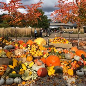 秋のガーデン