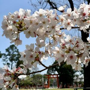 2021❤︎春の京都〜前編〜