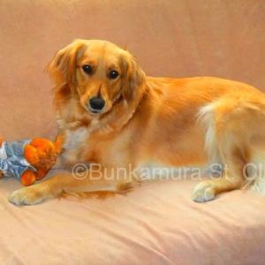 看板娘セラピー犬マリーの若い頃 人間では18歳 老いたのは若いのよりも更らに美しい