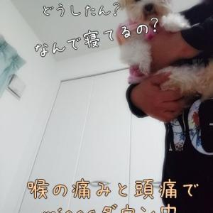 ふくや明太子の日福袋2019