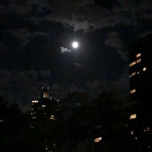 「月が綺麗ですね」…は、「I LOVE YOU!?」!?