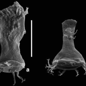 オルドビス紀末大量絶滅の原因は重金属