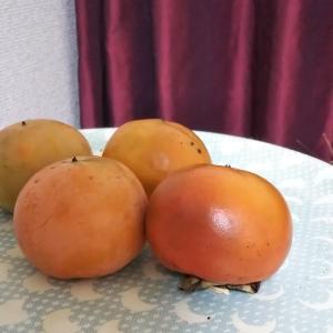 柿牛乳プリン