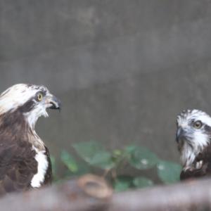令和になっても日曜日はいしかわ動物園(鳥類編)