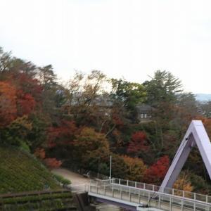 西山公園の紅葉とレッサーパンダ