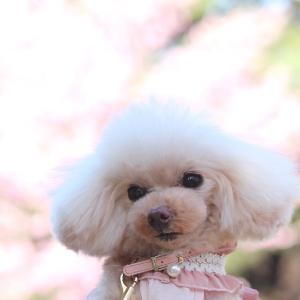 悲しい 桜散る春になってしまいました...