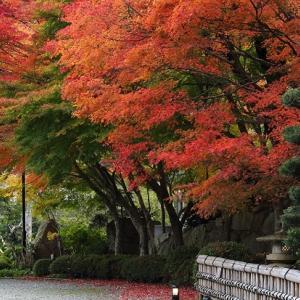 今年一番の紅葉風景