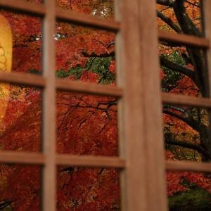 白峯寺の紅葉 ②
