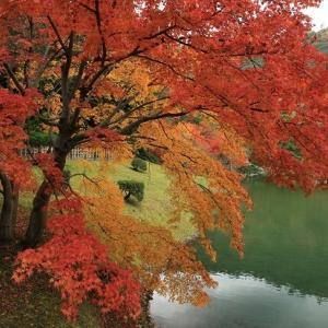 【今更ですが…】栗林公園の紅葉風景